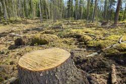 """Secondo il Wwf, """"emergono prove inquietanti su come l'Unione importi prodotti derivanti dalla deforestazione in quantità superiore a quella prevista""""."""