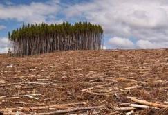 Europa-leader-mondiale-nella-deforestazione