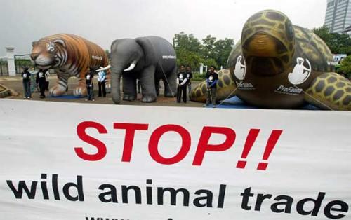 indonesia_animal_trade