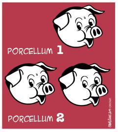 legge-elettorale-porcellum-italicum