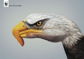 wwf_eagle_hand