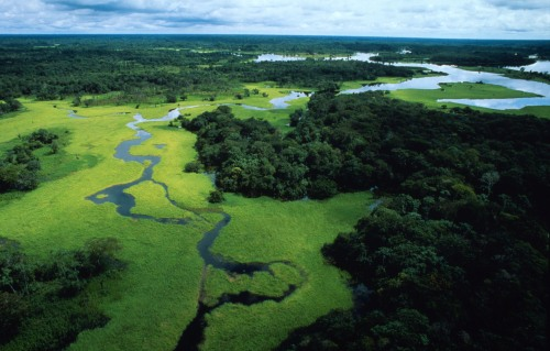 Flooded forest, Amazonas, Brazil